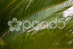 Palm frond in the wind Stock Photos