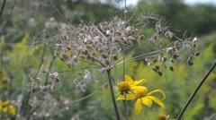 Seeding Flower Stock Footage
