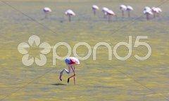 Flamingos, Parc Regional de Camargue, Provence, France Stock Photos