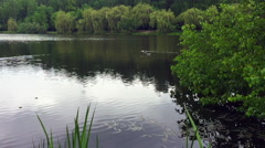 Lake view with green trees and bushes Stock Footage