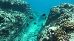 Underwater landscape carved ocean floor Stock Footage