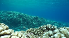 Underwater landscape ocean floor reef slope corals Stock Footage