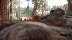 Six friends walk past log cabin in a forest towards camera Stock Footage