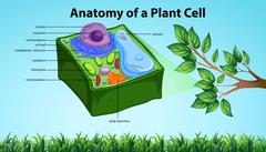 Anatomy of plant cell with names Stock Illustration
