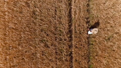 Aerial, vertical - Young woman with a sun hat walking in wheat field Stock Footage