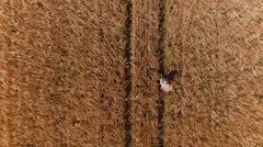 Aerial, vertical - Tracking shot of young woman walking in yellow wheat field Stock Footage