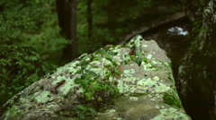 Plant Growing on Rock Boulder Outcrop Stock Footage