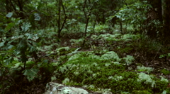 Forest Moss and Undergrowth Stock Footage