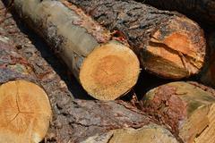 Sawlogs to produce general-purpose lumber Stock Photos
