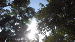 The smooth movement of the camera through the trees in the park Stock Footage