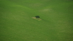 Aerial shot of single tree on farmland in California Stock Footage