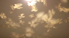 A lot of winged termite playing light of the house in the rural area, Thailand Stock Footage