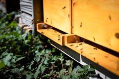 Closeup of an beehive Stock Photos