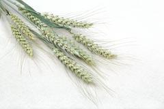 Sheaf of wheat ears on fabric. Kuvituskuvat
