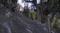 Hiking Methuselah Trail loop Stock Footage