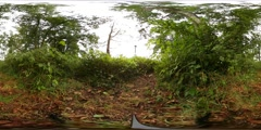 360 VR Low angle shot nature reserve thicket with timelapse camera in action Stock Footage