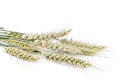 Sheaf of wheat ears on white background. Kuvituskuvat