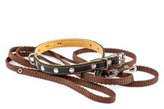 Leather collar and leash on a white background. Stock Photos