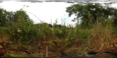 360 VR Wind in grass and trees low angle shot nature reserve with lake Stock Footage