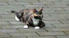 A lovely cat, in the outdoor leisure, activities Stock Footage