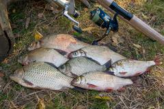 Catching freshwater fish and fishing rods with fishing reels on green grass. Stock Photos