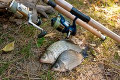 Catching freshwater fish and fishing rod with fishing reel on green grass. Cr Stock Photos