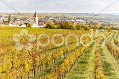 Autumnal vineyards in Retz region, Lower Austria, Austria Stock Photos