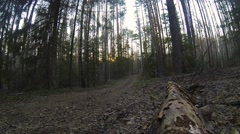 Mountain biker rides in autumn forest Stock Footage