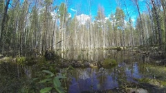 Beautiful swamp landscape in autumn forest. Sky and trees reflects in water Stock Footage