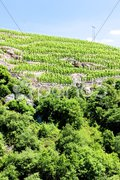 Grand cru vineyard, Cote Rotie, Rhone-Alpes, France Stock Photos