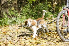 Dog on dog leash Stock Photos