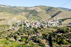 Vineyars in Douro Valley, Portugal Stock Photos