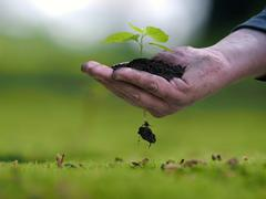 Man's hand holding a plant, a handful of earth. The root of the little germ. Stock Photos