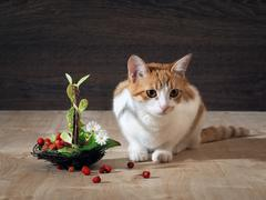 Still life - a cat and  basket of wild strawberries Stock Photos