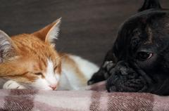 Cat and dog sleeping together. Snouts animals near Stock Photos