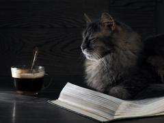 Gray big cat lies on the open book. Nearby stands a cup of coffee. Stock Photos