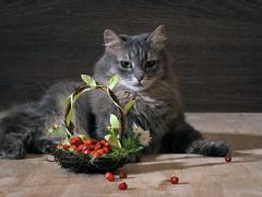 Big cat and a basket of wild strawberries Stock Photos