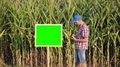 Young farmer uses a digital tablet on the background of corn fields. Stock Footage