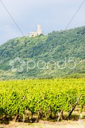 Vineyards with castle Ortenbourg, Alsace, France Stock Photos