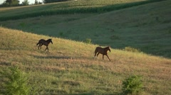 Two horses running in slo-mo. Stock Footage