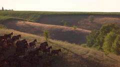 Horse herd runs in slo-mo. Stock Footage
