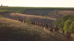 Horses are running in slow-mo. Stock Footage