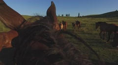 Horses walk in slo-mo. Stock Footage
