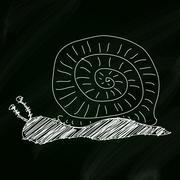 Doodle sketch of a snail on a blackboard background Stock Illustration