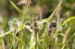 Filigree grasses Stock Photos