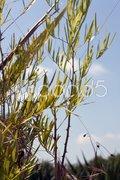 Bamboo leaves against a blue sky Stock Photos