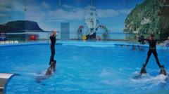 Dolphin Performance in the Dolphinarium Stock Footage