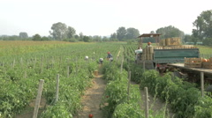 Tractor with crates on the trail pass through the tomatoes plantation by Cutter. Stock Footage