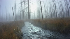 Stream in morning mist, Yellowstone National Park, Wyoming Stock Footage