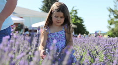 Mother and daughters picking lavendar in a field Stock Footage